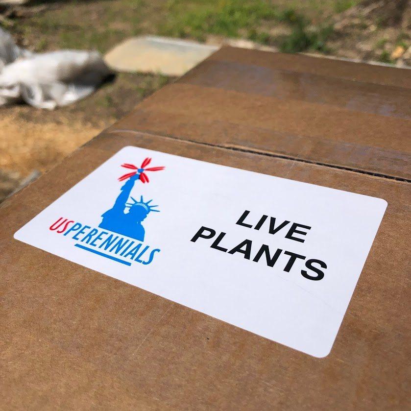 US Perennials nursery - mail order nursery - shipping the plants